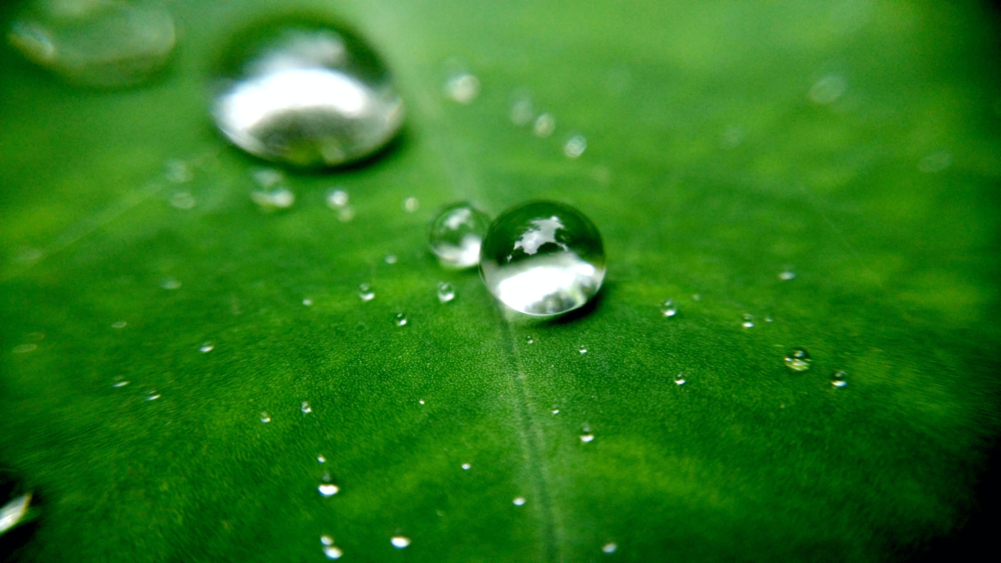 Free stock photo of drop of water, drops of water, underwater, water
