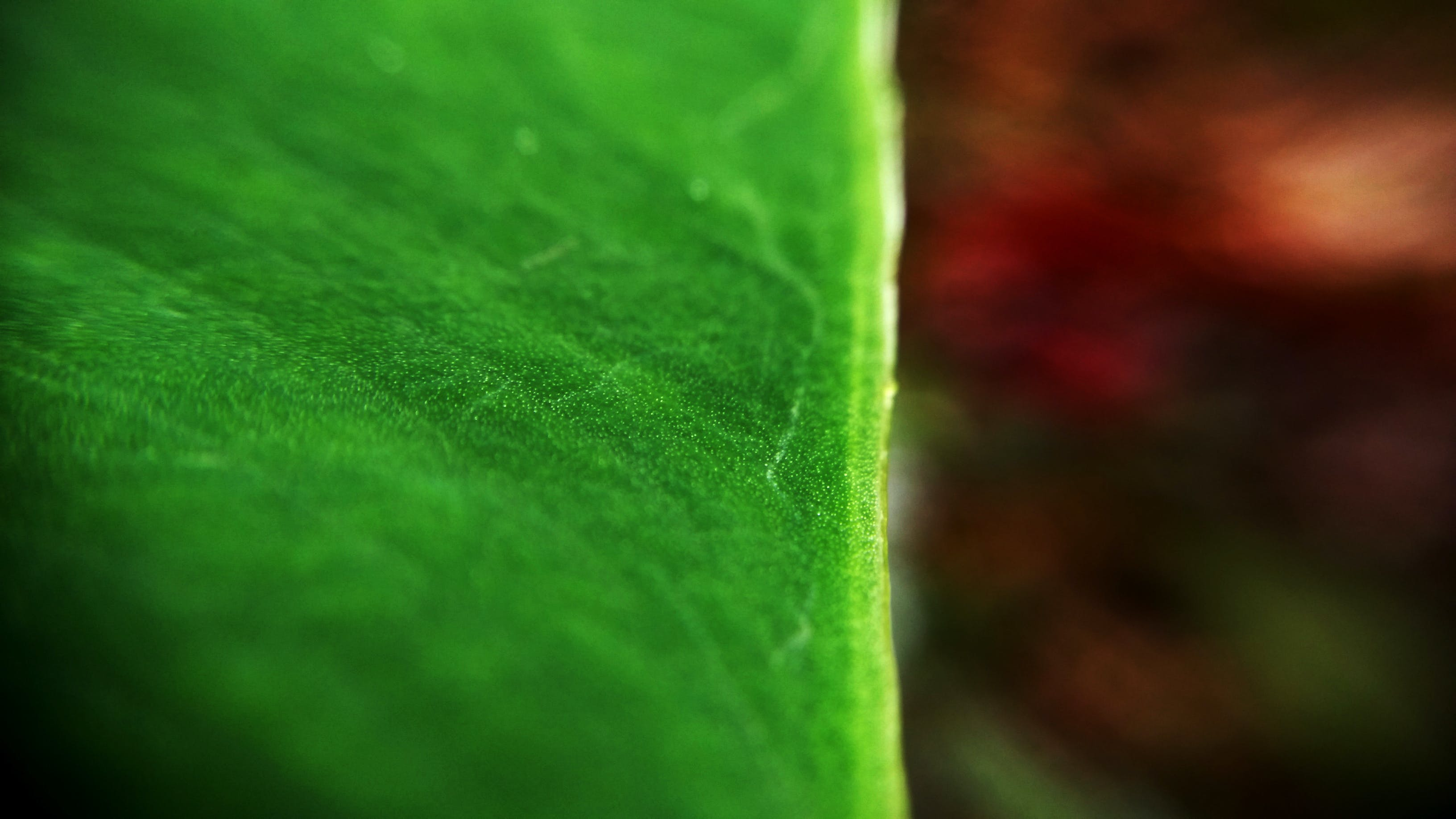 Free stock photo of evergreen, green, green leaves