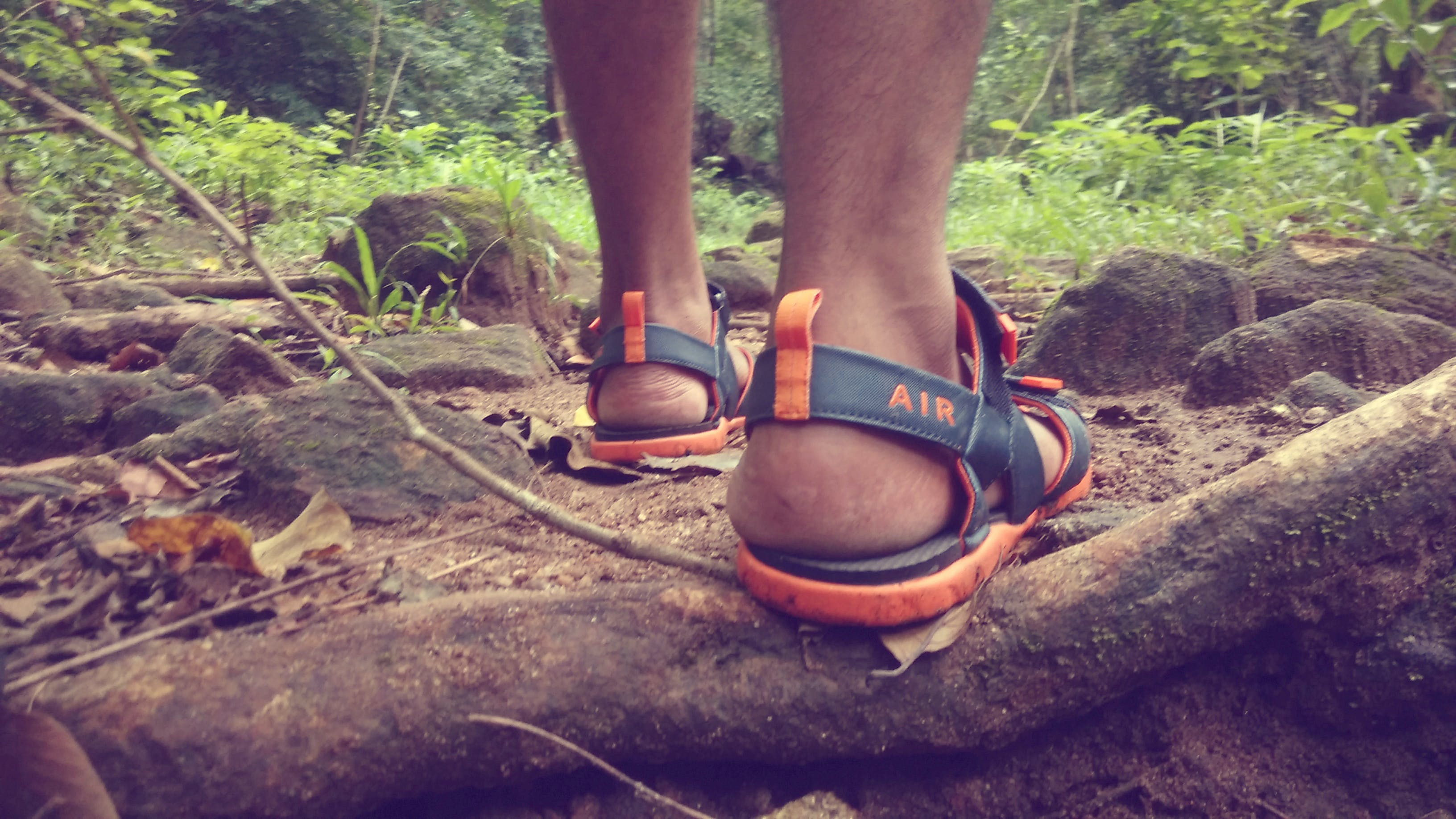 Free stock photo of forest, sandals, tropic rainforest, way
