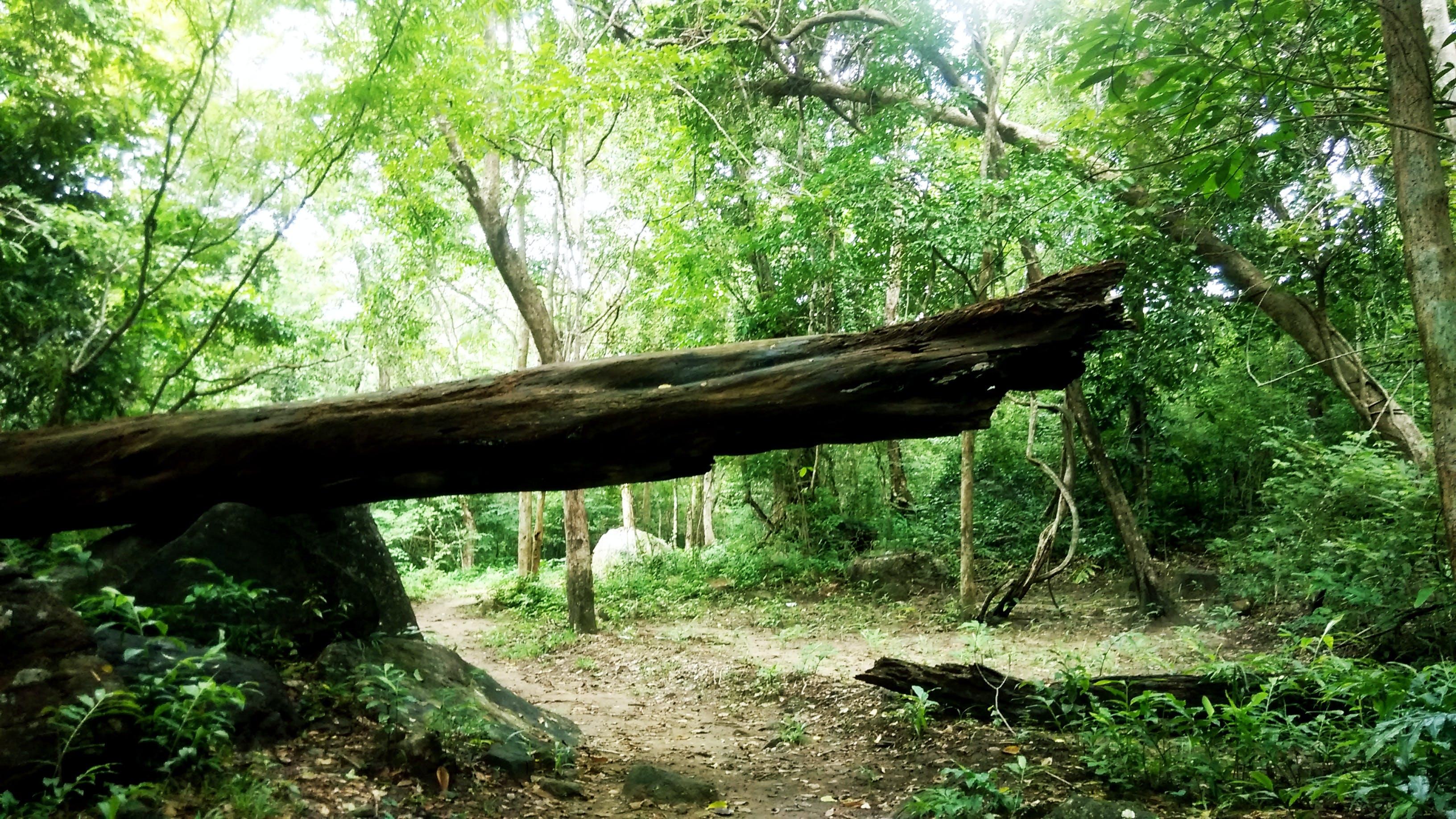 Free stock photo of fallen tree, forest, rain forest, rainforest
