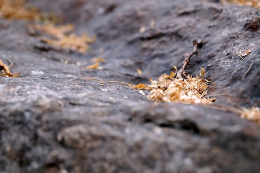 Free stock photo of rock, twig, dry leaves