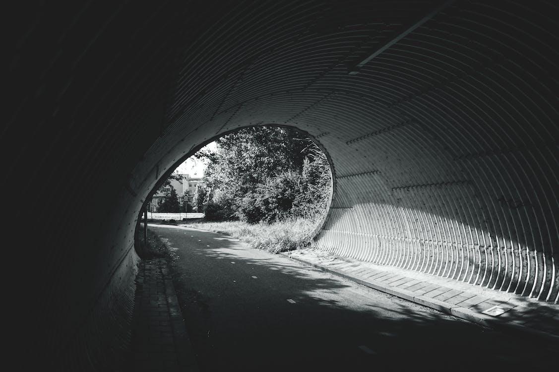 arboles, blanco y negro, calle