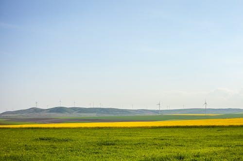 Immagine gratuita di all'aperto, estate, giallo, natura