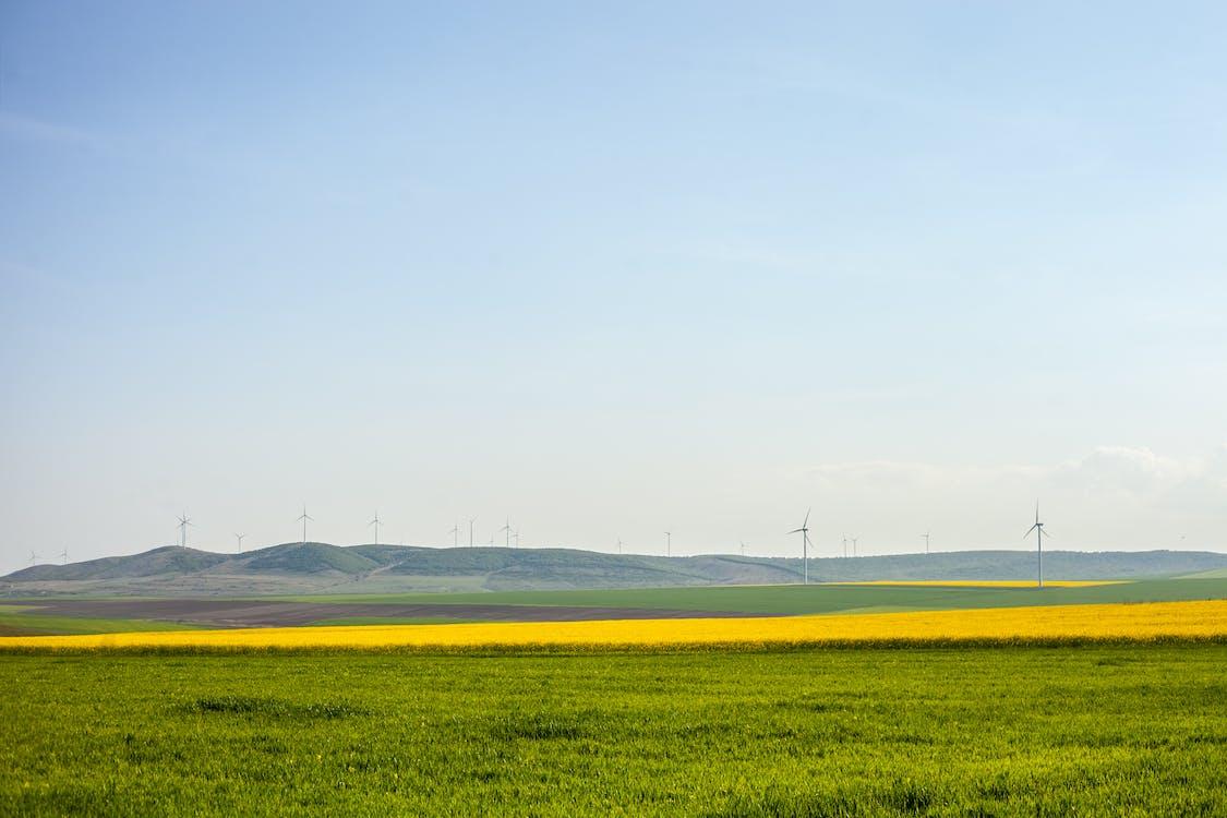 жовтий, зелений, краєвид