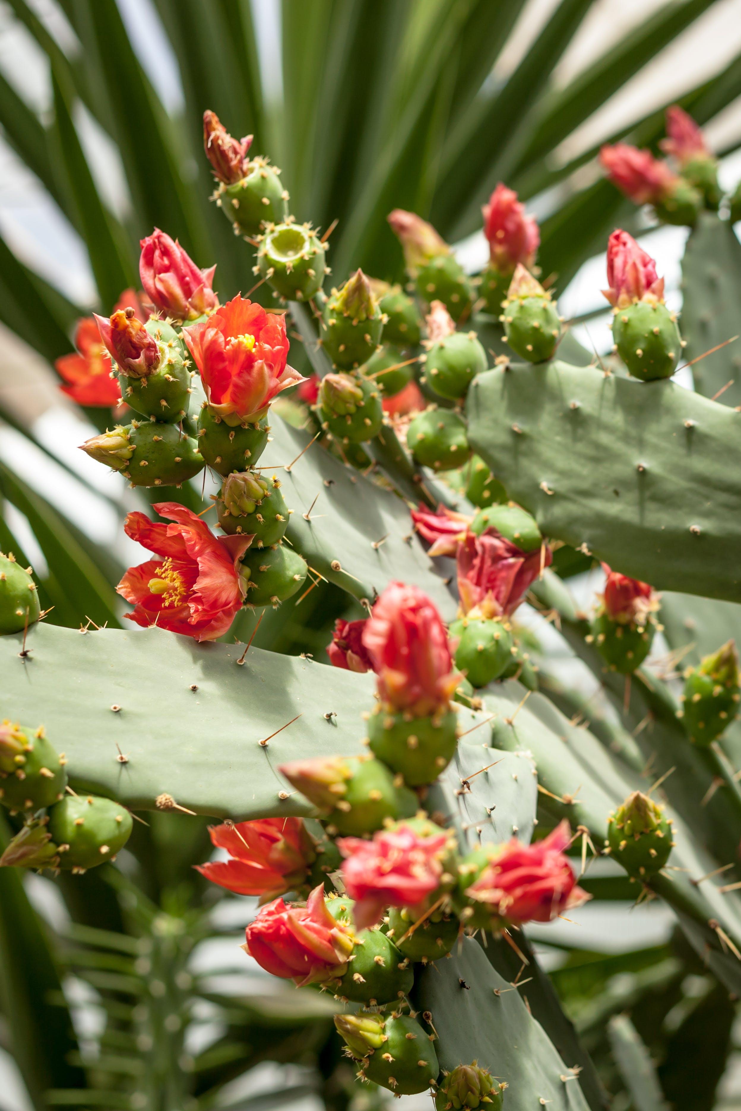 Free stock photo of plant, cactus, cacti
