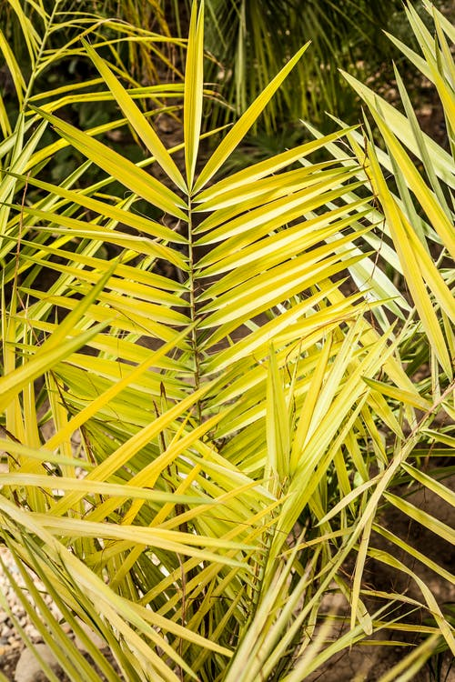 Free stock photo of exotic, plant, yellow