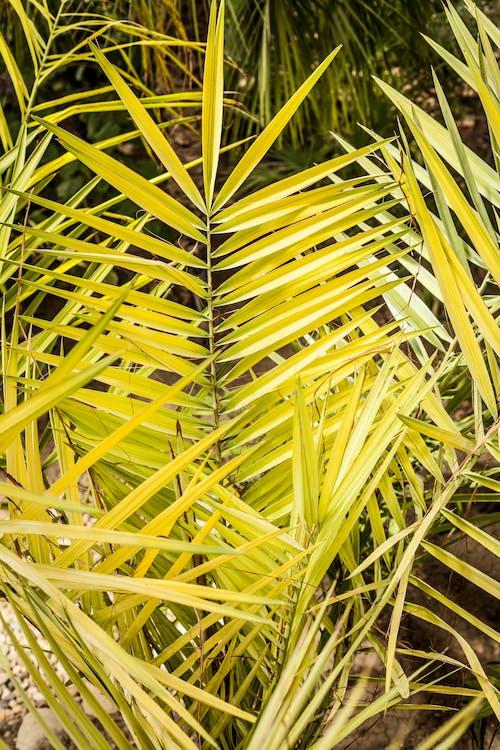 Immagine gratuita di esotico, giallo, impianto