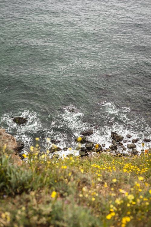 Immagine gratuita di estate, mare, natura, selvaggio