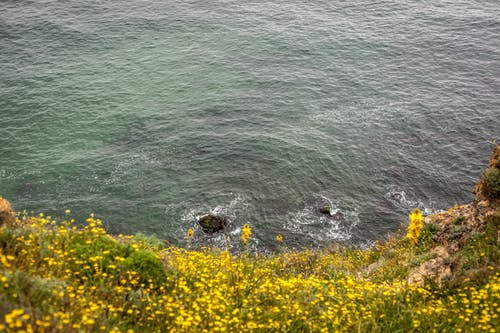Fotos de stock gratuitas de mar, naturaleza, salvaje, verano