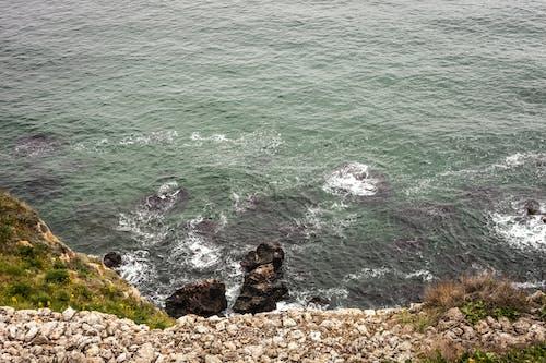 Free stock photo of nature, sea, wild