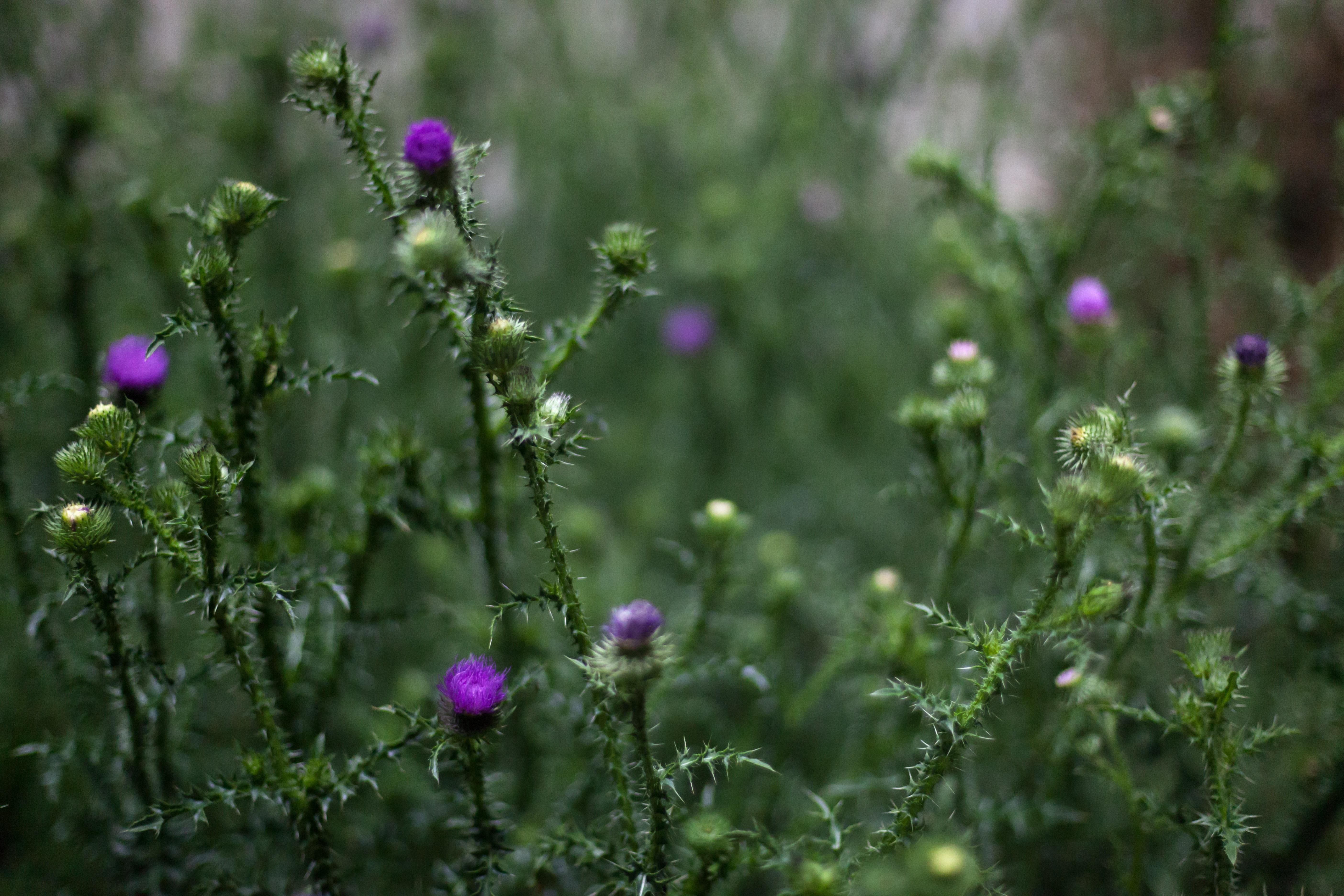 Free stock photo of nature, wild, wild plant