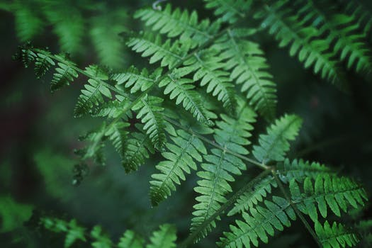 Close-Up Photography of Fern Leaves