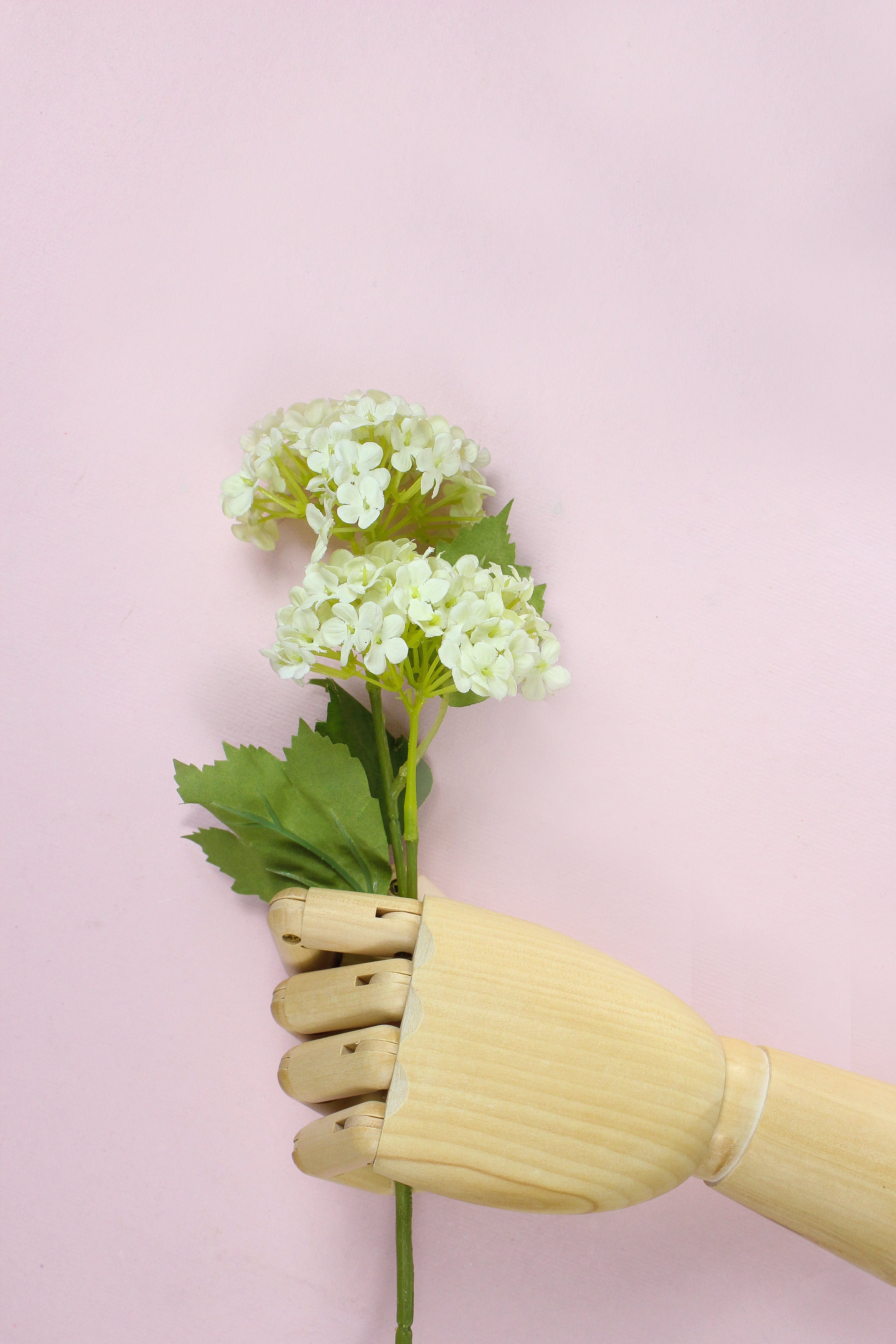 Brown Wooden Hand Holding White Hydrangea Flowers