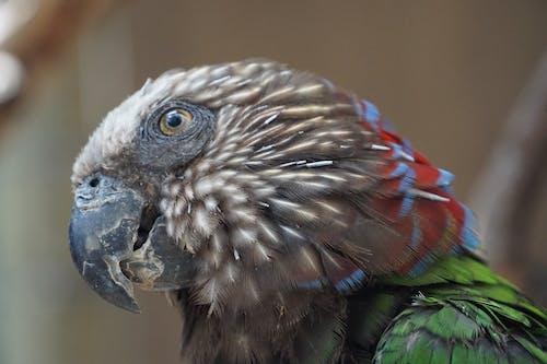 Fotobanka sbezplatnými fotkami na tému papagáj