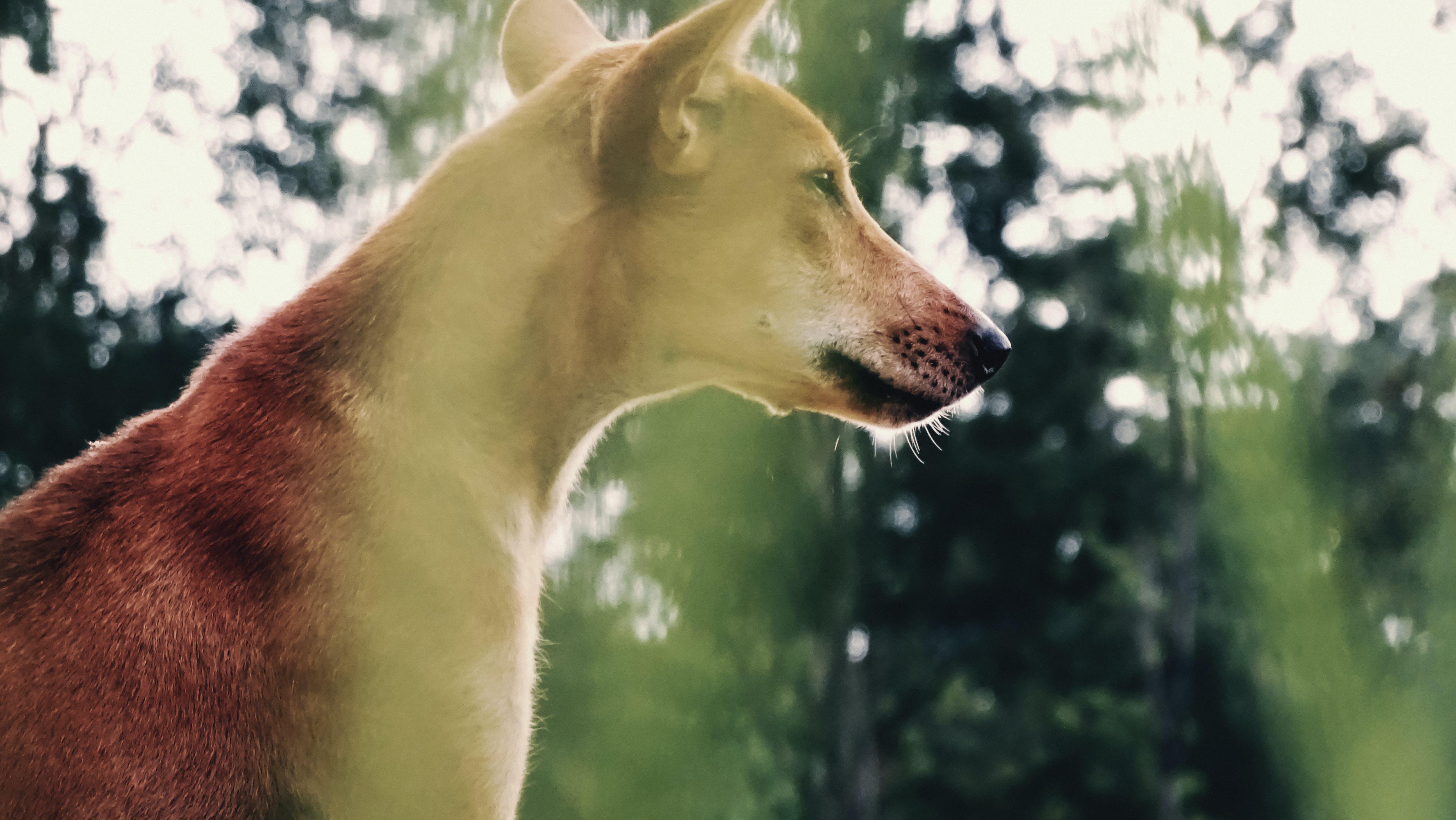 Free stock photo of #wildlife, animal, animal photography, animal portrait