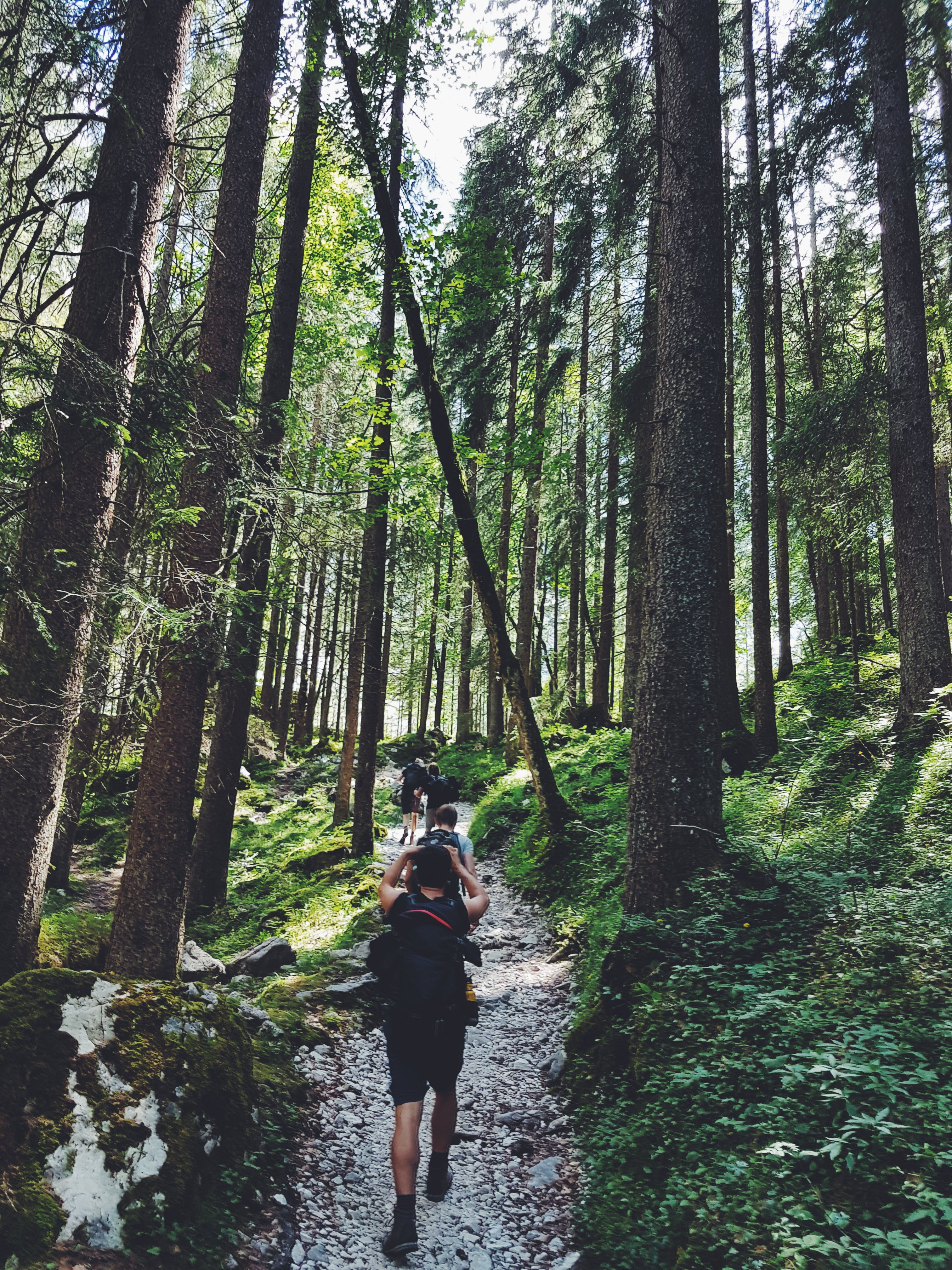 Four People Walking on Gray Path Surrounded by Tall Trees