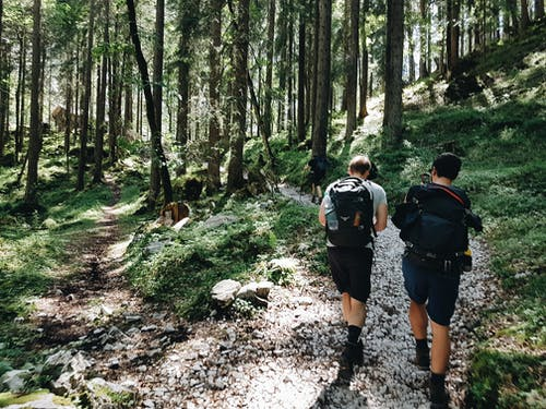 Unrecognizable travelers with rucksacks walking on pathway in forest