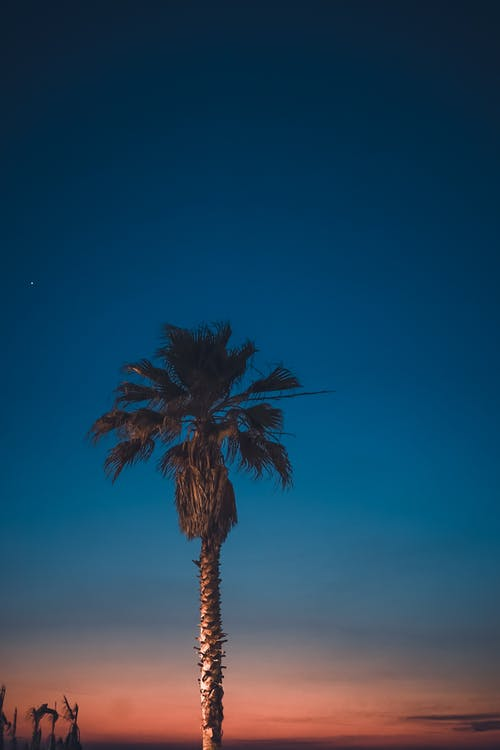 Green Palm Tree Overlooking Sunset
