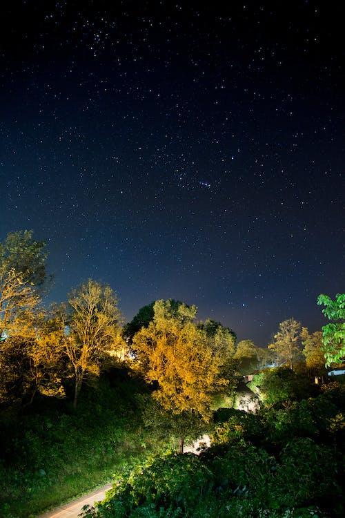 Kostenloses Stock Foto zu bäume, dunkel, gras, himmel