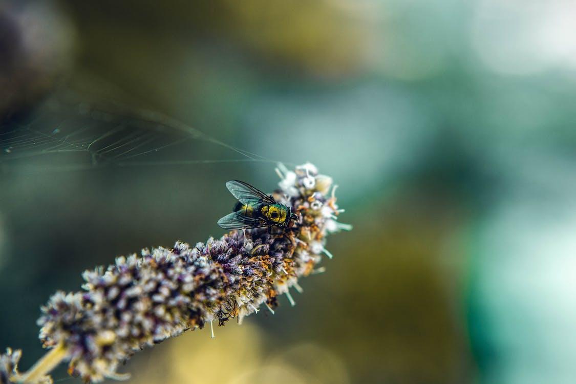 곤충, 꽃, 날개