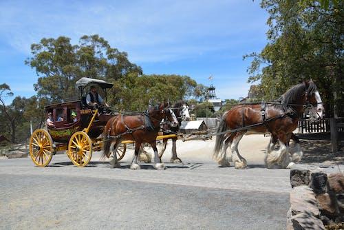 Fotos de stock gratuitas de #caballos, #diligencia, #fiebre del oro, #minería de oro