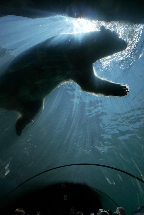 Free stock photo of animal, aquarium, hokkaido