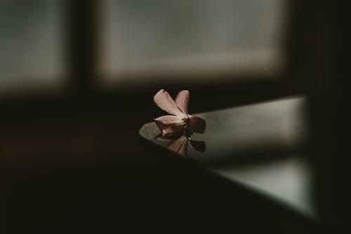 インドア, ダーク, ピンクの花, 側面図の無料の写真素材