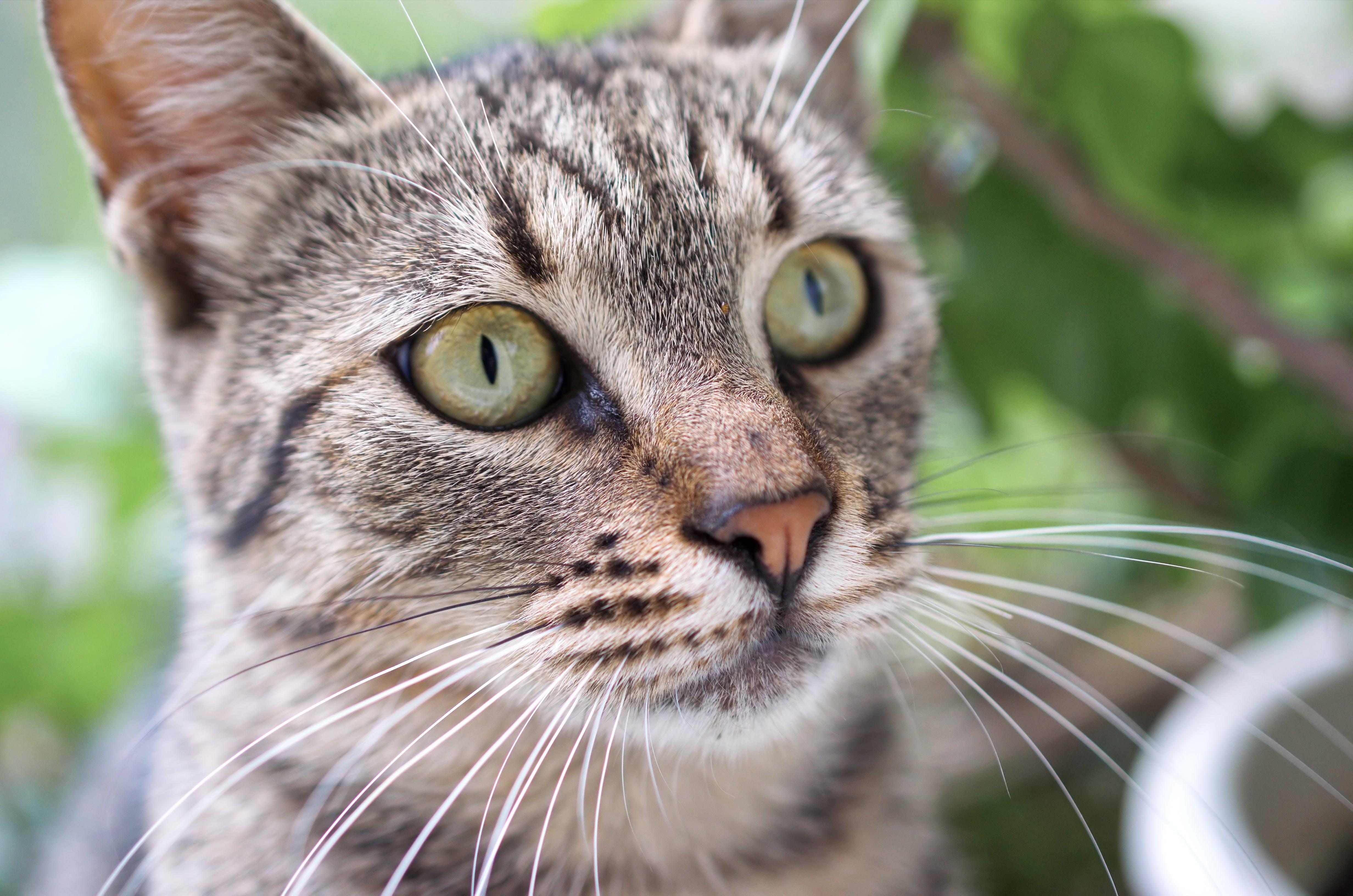 Tilt Shift Photography of Brown Tabby Cat