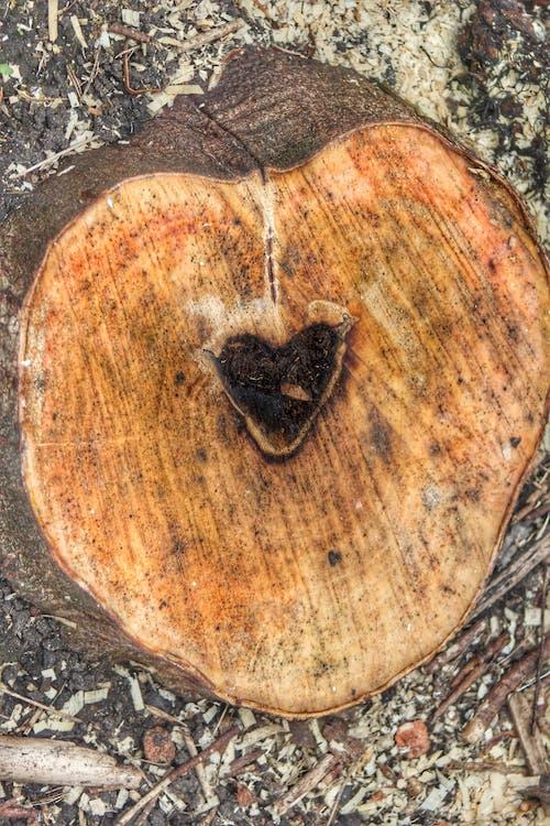 Fotobanka sbezplatnými fotkami na tému srdce