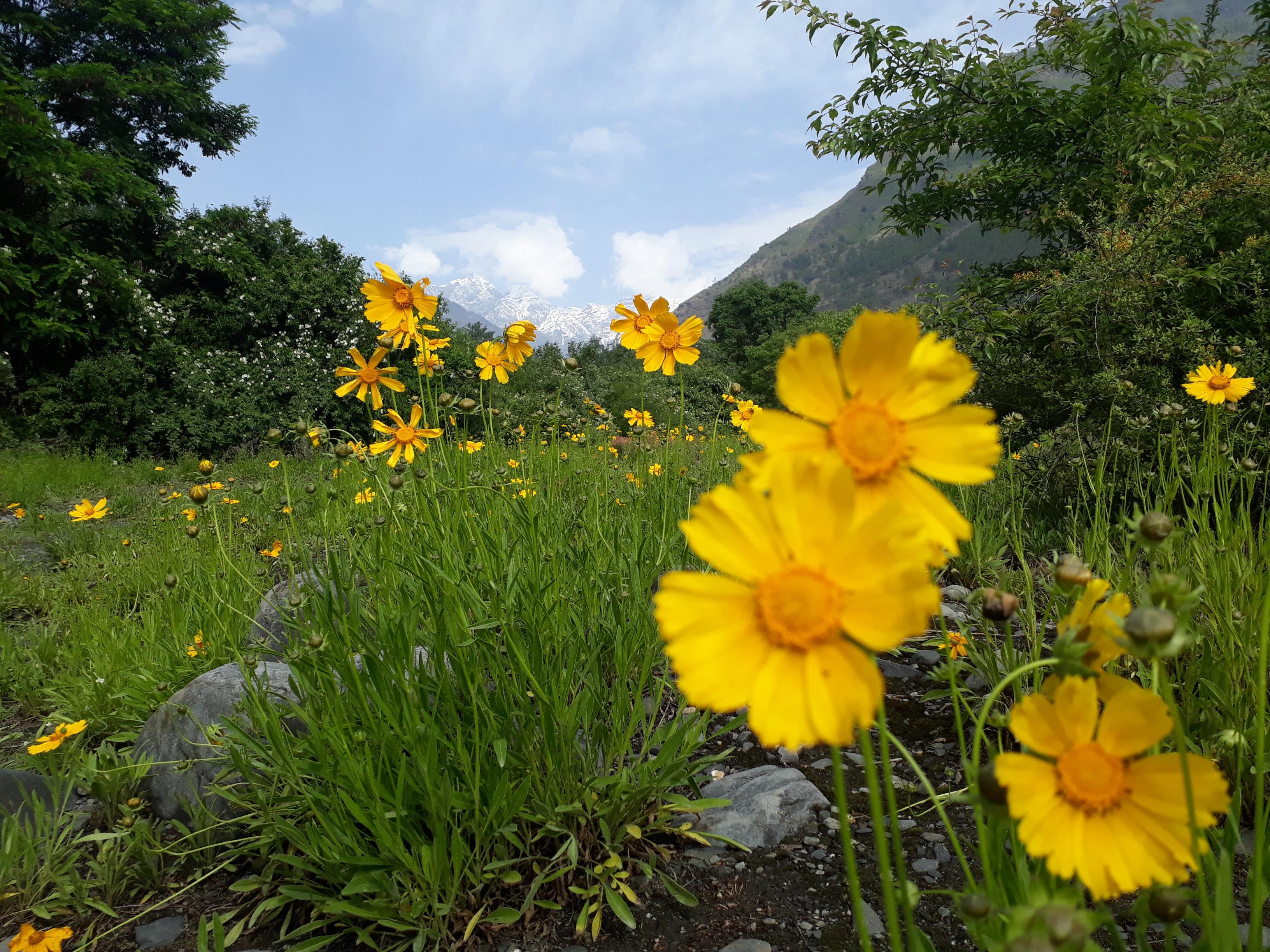 Foto Stok Gratis Tentang Pemandangan Bunga Tampilan Manali