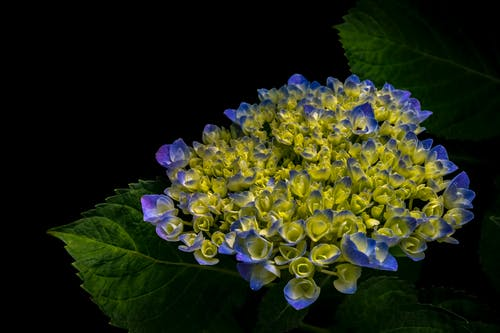 Close-up Photography of Yellow and Blue Petaled Flowers