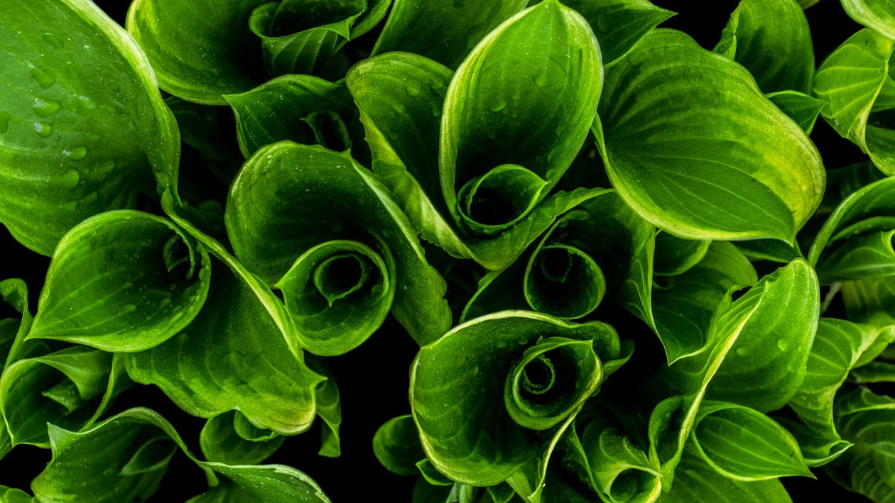 Close-up Photography of Green Leafed Plants