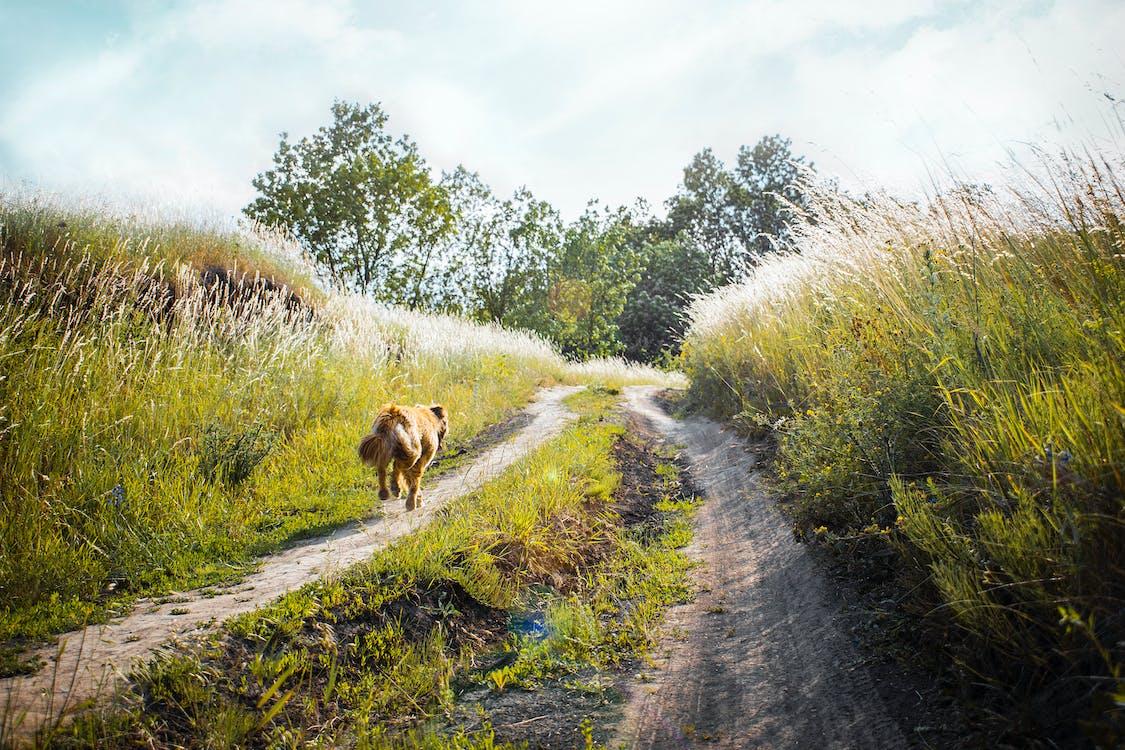 aleargă, animal, arbori