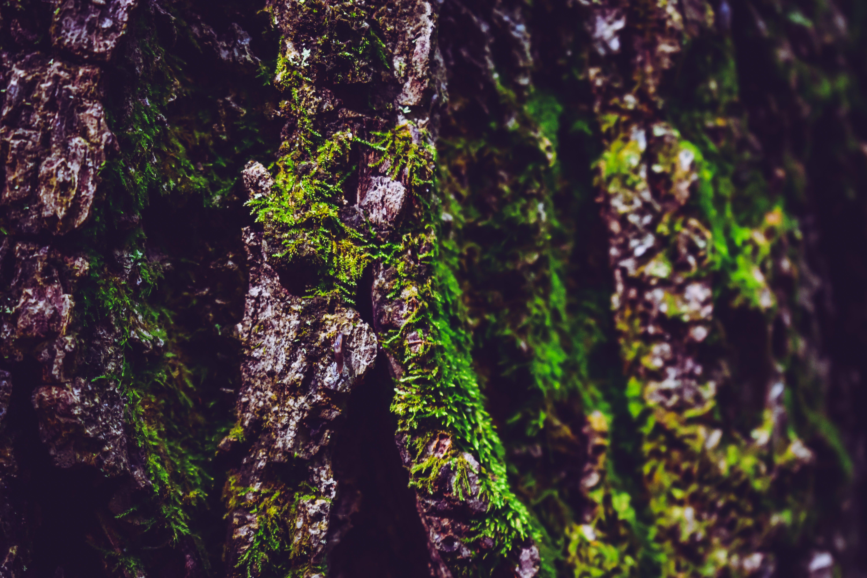 Free stock photo of wood, nature, moss, tree