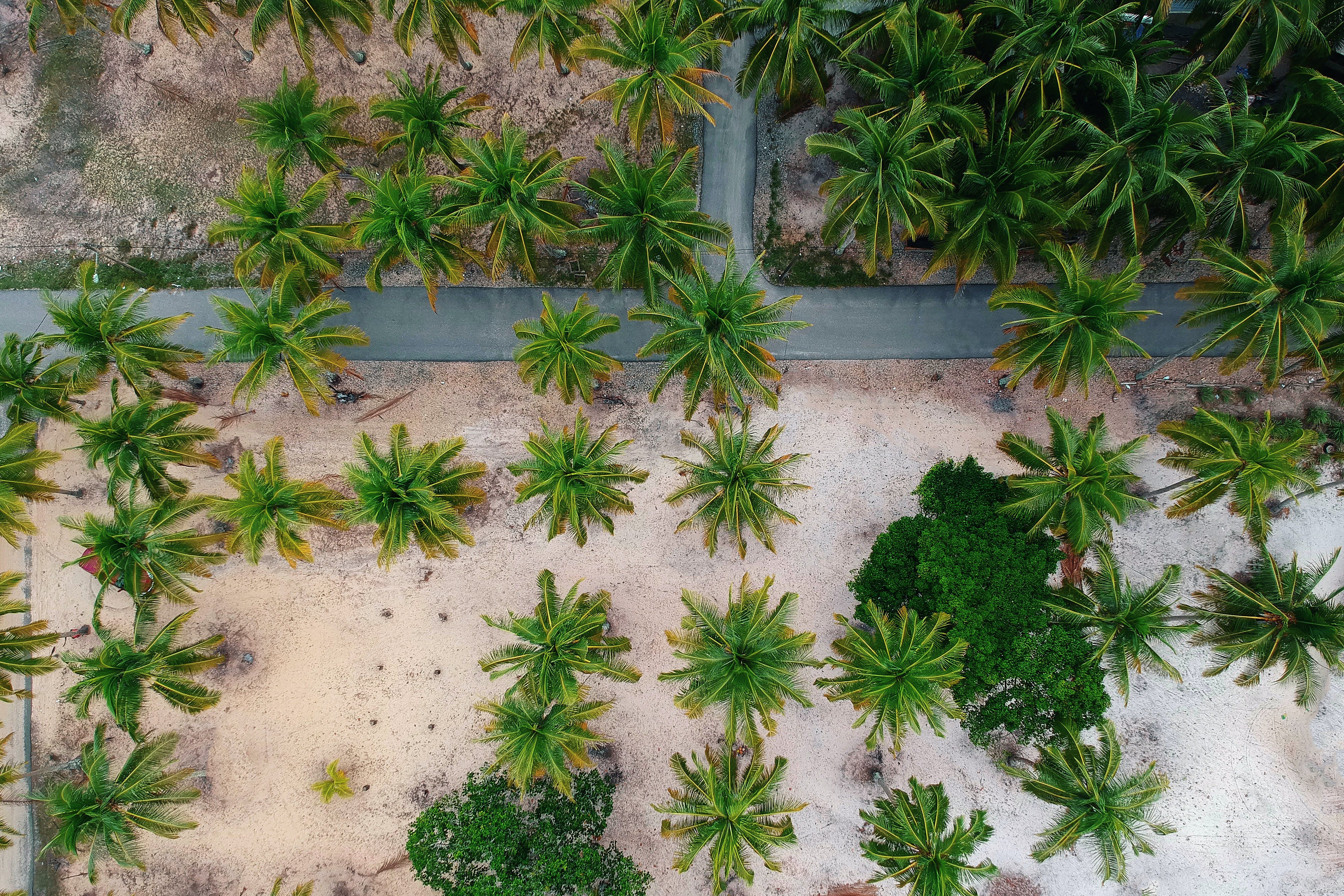 Aerial View Photo of Palm Trees.