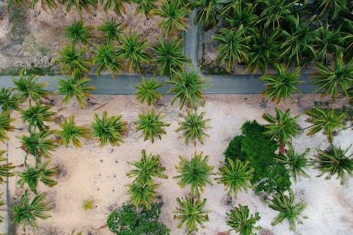 Imagine de stoc gratuită din arbori, drum, fotografie cu drona, nisip