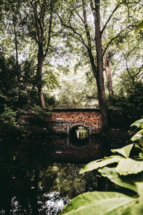 Ilmainen kuvapankkikuva tunnisteilla aamu, heijastukset, joki, kasvu
