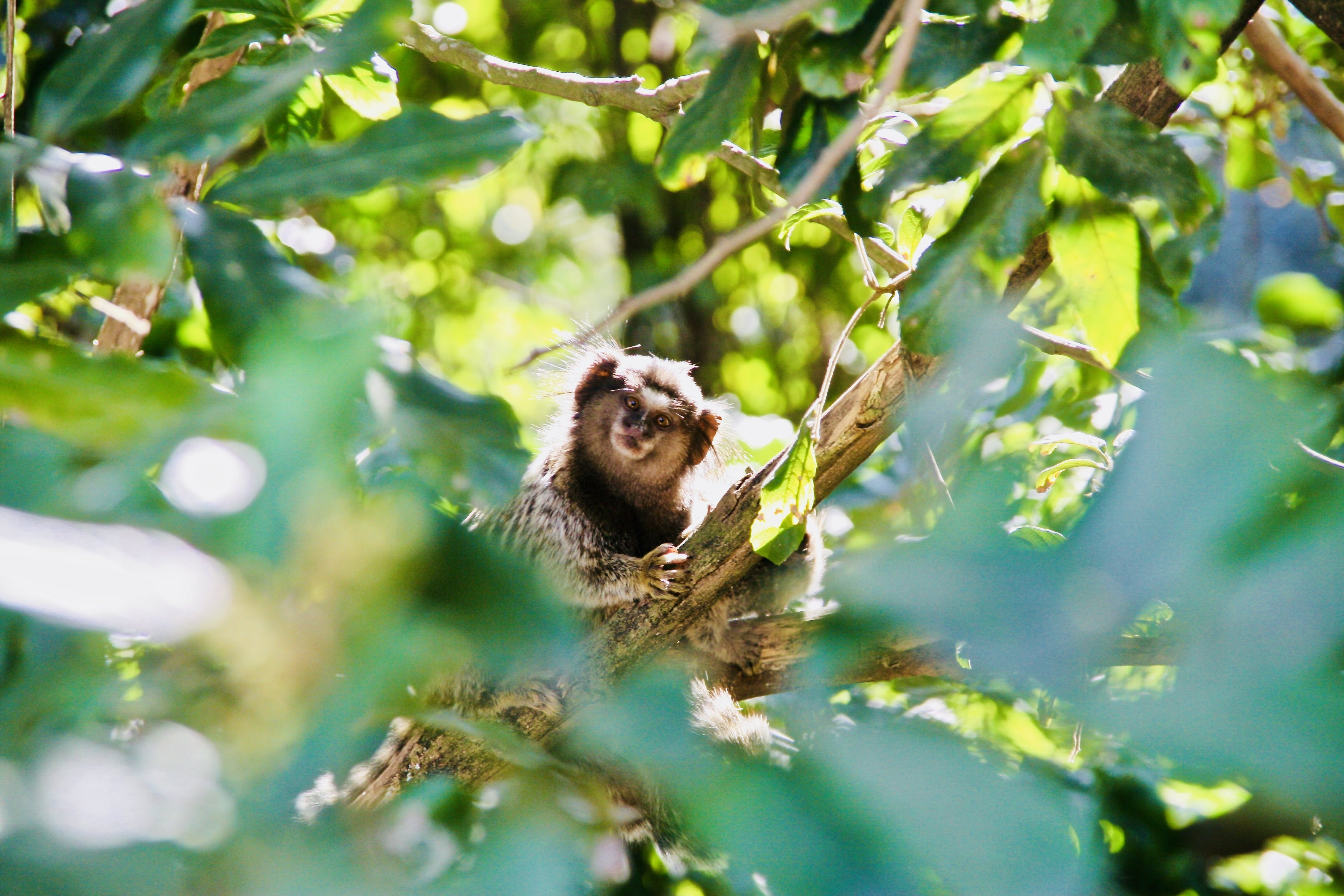 Free stock photo of monkey, small monkey, wild, wild animal