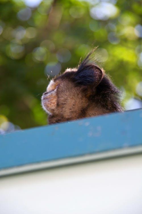 Základová fotografie zdarma na téma divoké zvíře, divoký, malá opice, opice