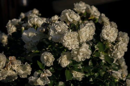 Ilmainen kuvapankkikuva tunnisteilla kukat, kukka, tummat värit, vihreä