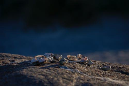 Ilmainen kuvapankkikuva tunnisteilla hiekkaranta, ranta kuori, rantakuoret, simpukankuoret