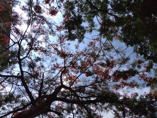 Foto stok gratis bunga merah, langit