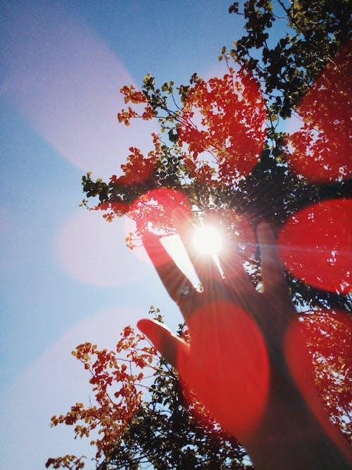 Darmowe zdjęcie z galerii z drzewo, flara obiektywu, ręka, światło słoneczne