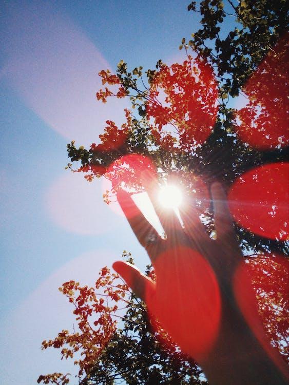 Hand Under Sun And Tree