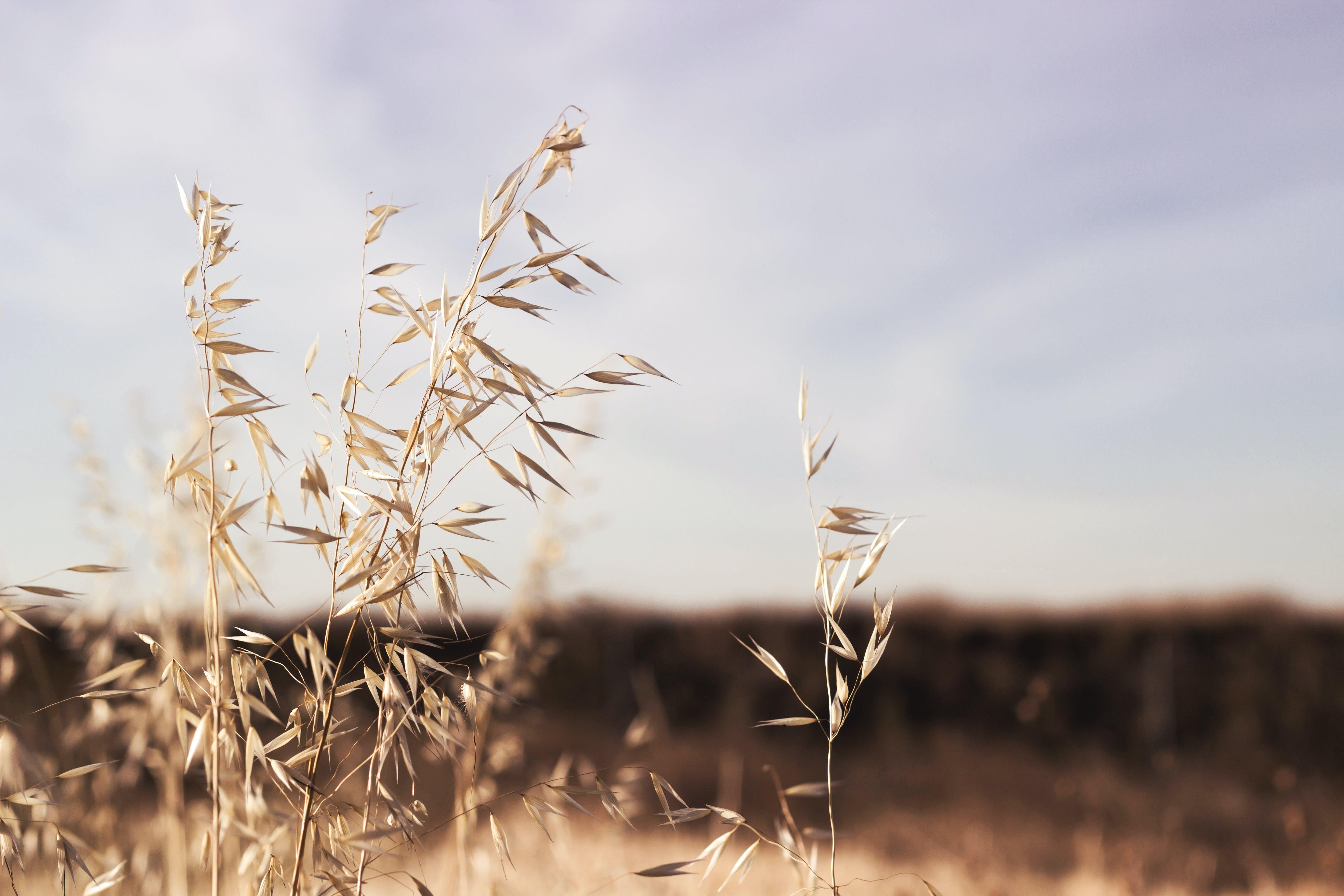 zu himmel, nahansicht, natur, pflanzen