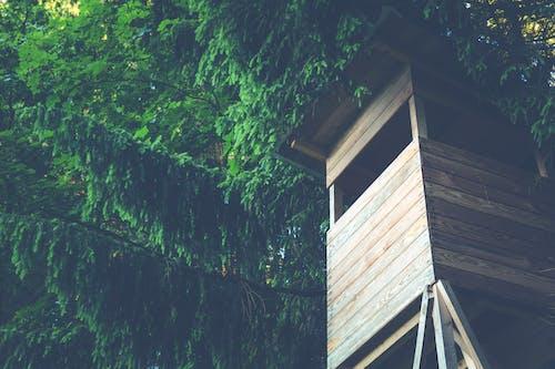 Kostnadsfri bild av grenar, lågvinkelskott, löv, lövverk