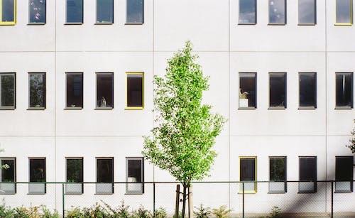 Foto d'estoc gratuïta de arbre, asimetria, escena urbana, simètric