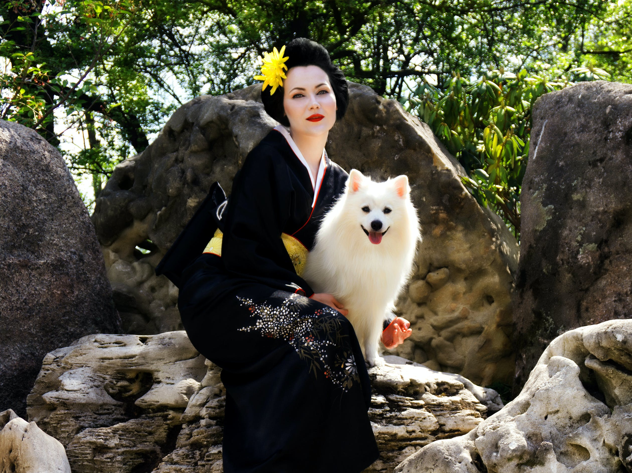 dogs, geisha, japan