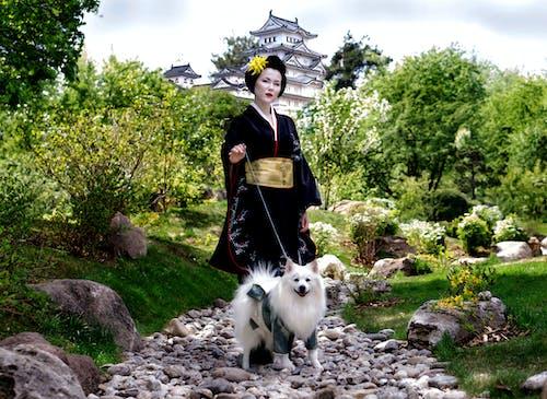 Бесплатное стоковое фото с белые собаки, гейша, домашние животные кутюрье simba, кимоно
