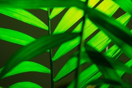 Fotos de stock gratuitas de brillante, colores, crecimiento, estampado